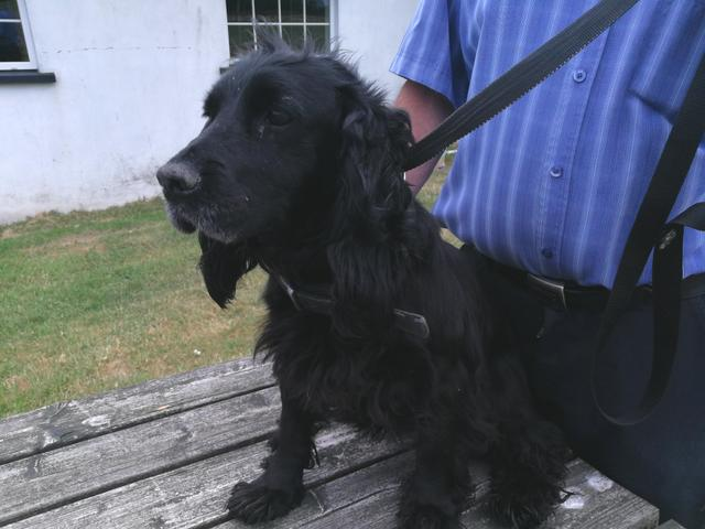 Appeal for help: Elsie the Cocker Spaniel
